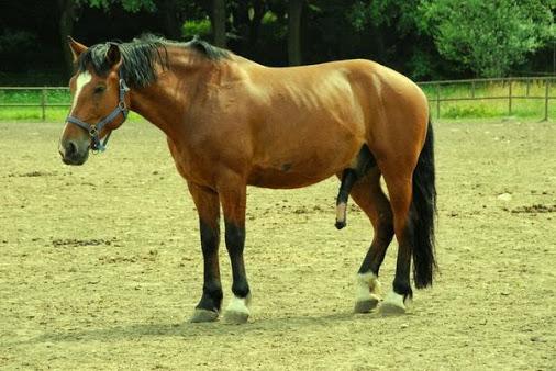 Muhammad Stallion